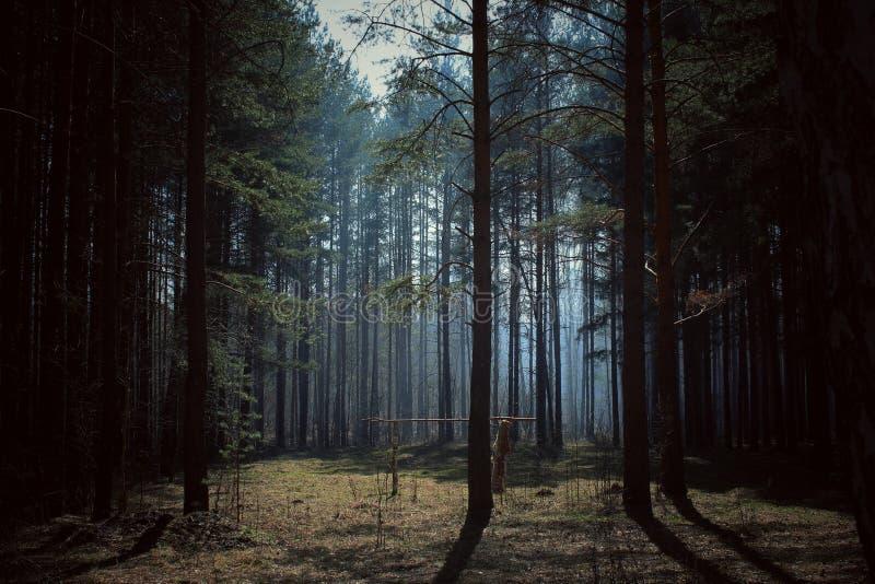 Känslan av skogen arkivfoto