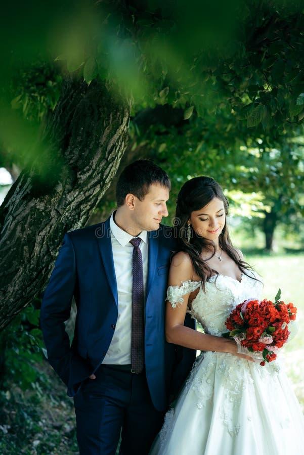 Känslig utomhus- stående av de ursnygga nygifta personerna som kramar under trädet Den le brunettbruden rymmer och royaltyfri fotografi