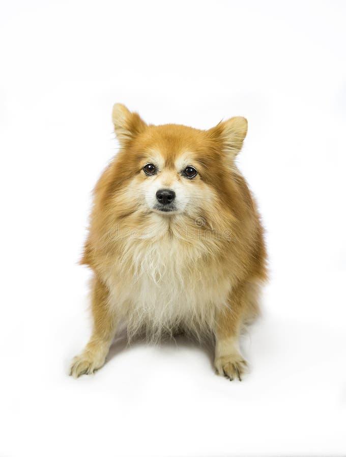 Kär familjhund royaltyfri fotografi