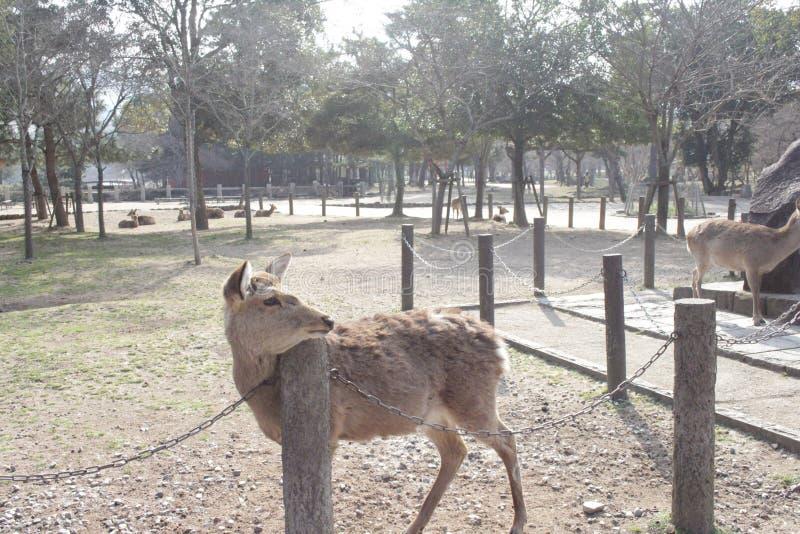 Kära Nara fotografering för bildbyråer