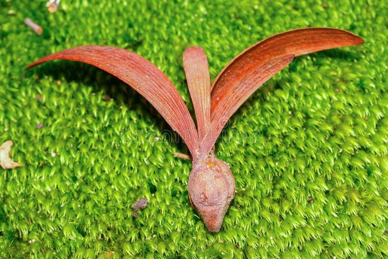 Kärna ur på grön mossa arkivfoton