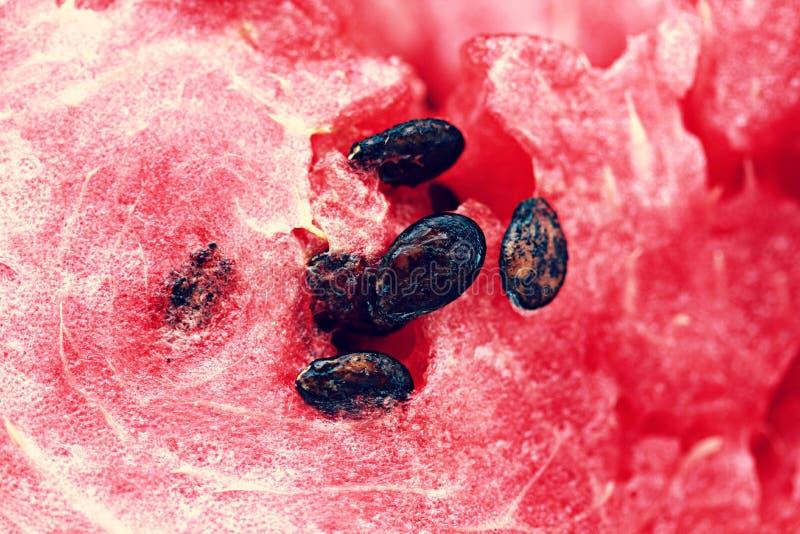 kärnar ur vattenmelonen royaltyfria foton