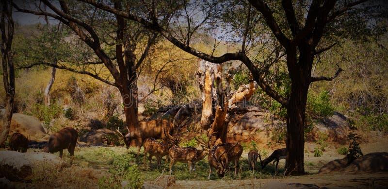 Kärt skogliv arkivbild