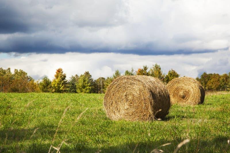 Kärvar av hö som ligger i ett fält för regnet arkivbilder