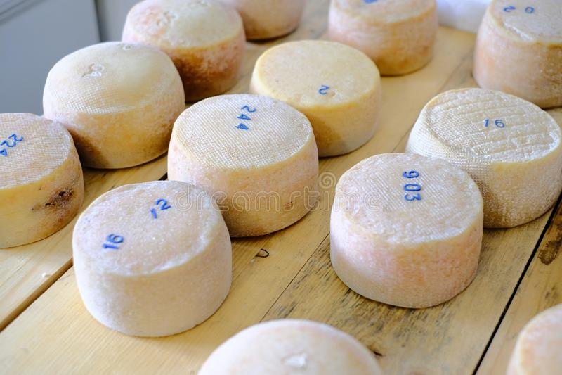 Käse geht auf der Fabrik voran, die fertig wird, die Regale zu schlagen stockfotografie