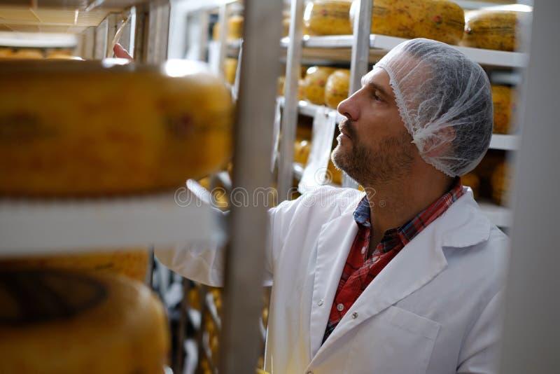 Käsehersteller, der bereites Produkt in einem Lagerraum überprüft stockbild