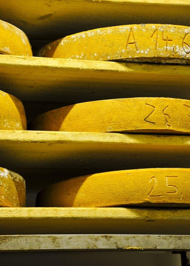 Käseräder lizenzfreies stockfoto