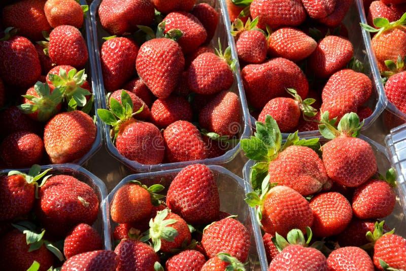 Kästen Erdbeeren stockbilder