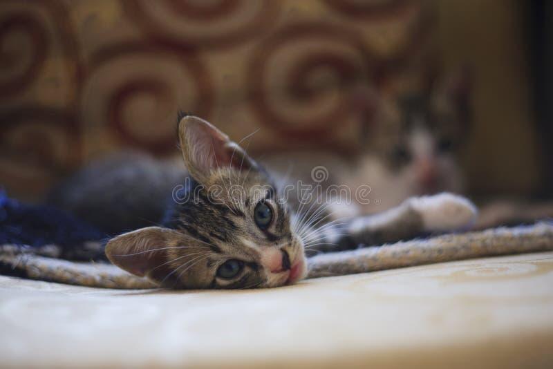 Kätzchen lizenzfreie stockfotos