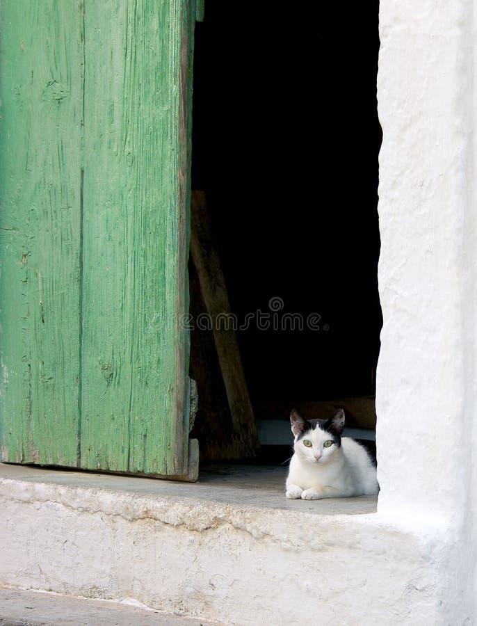 Download Kätzchen stockbild. Bild von kitten, weiß, nett, schwarzes - 33897