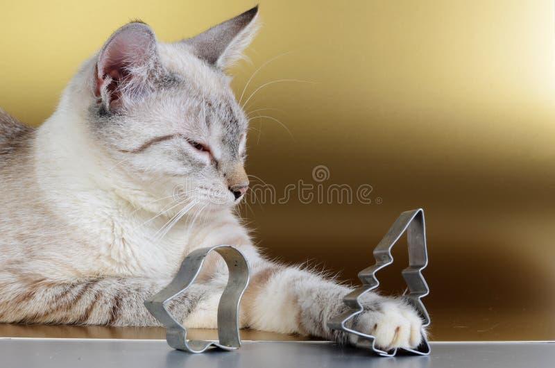 Kätzchen lizenzfreies stockfoto