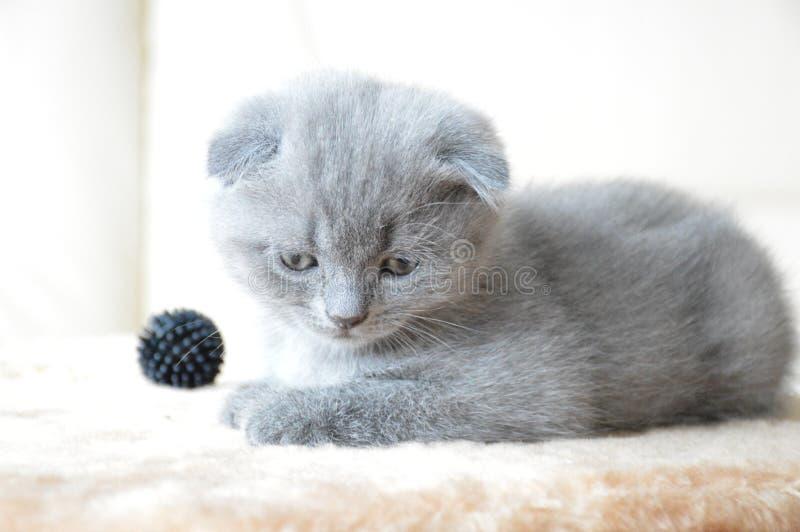 Kätzchen stockfotos