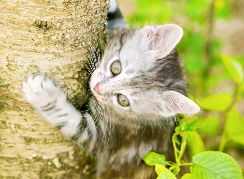 Kätzchen auf Baum lizenzfreies stockbild