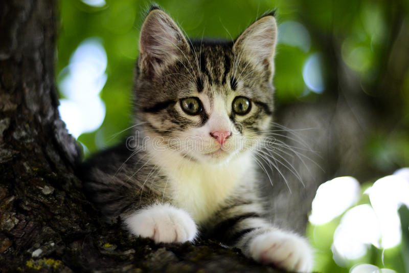 Kätzchen auf dem Baum lizenzfreies stockfoto