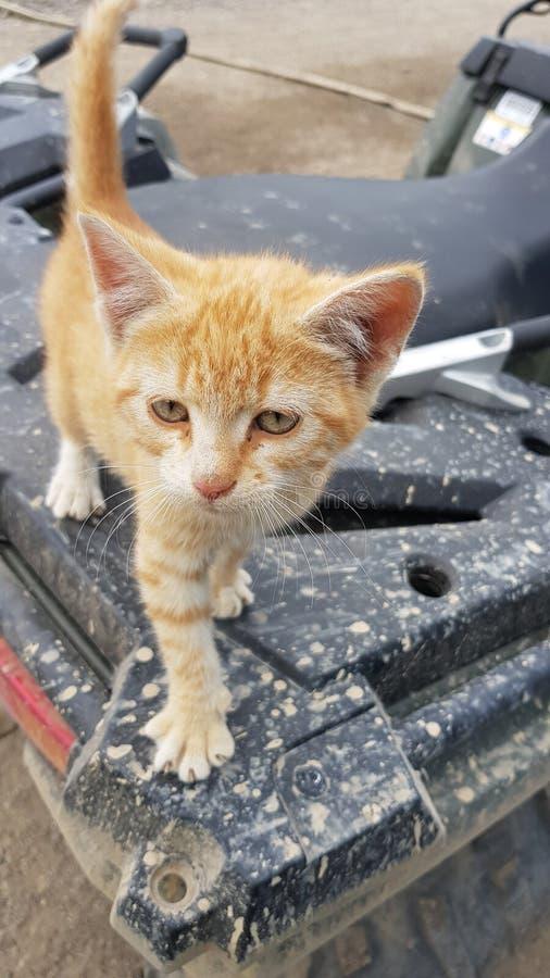 Kätzchen auf einem ATV stockbild