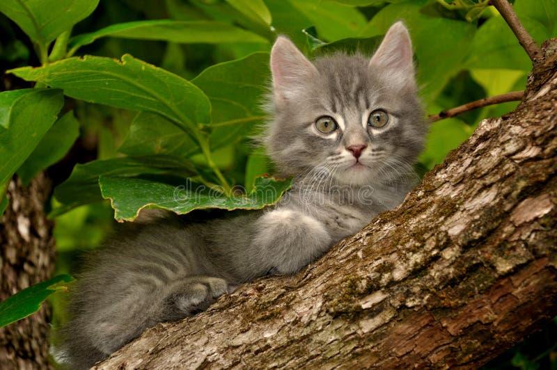 Kätzchen auf einem Baum stockfotografie