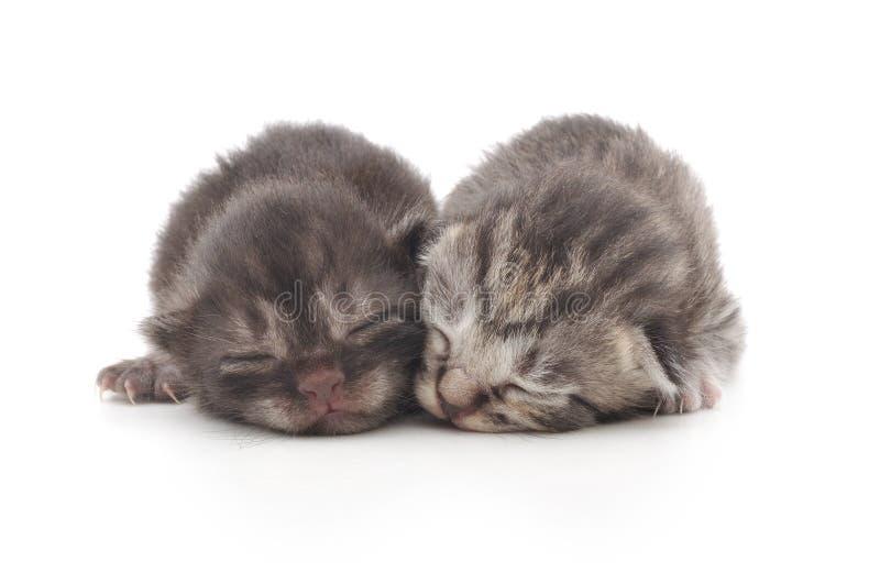 Kätzchen auf einem weißen Hintergrund lizenzfreies stockbild
