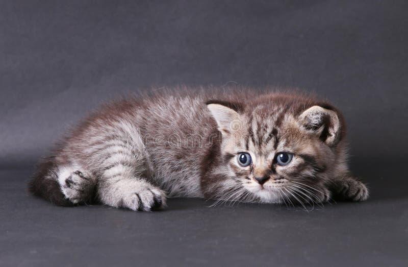 Kätzchen auf schwarzem Hintergrund stockfoto