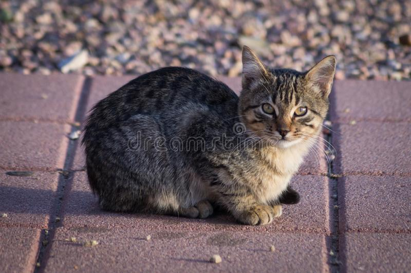 Kätzchen auf sonnigem Bürgersteig lizenzfreies stockbild