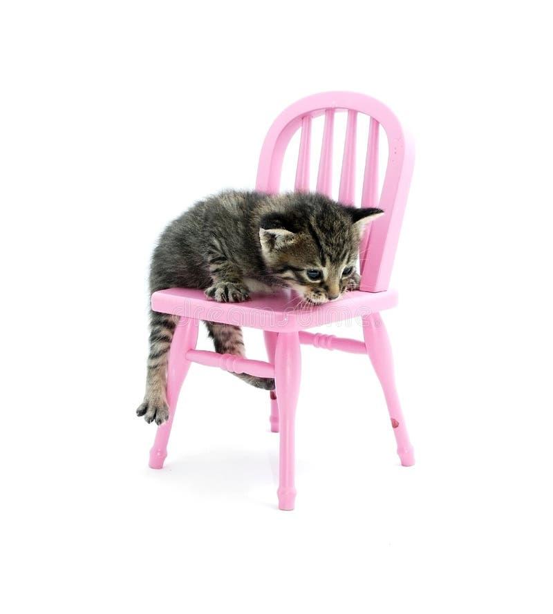 Kätzchen, das auf einem Stuhl steigt stockfotos