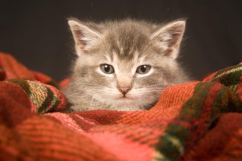 Kätzchen, das auf einer roten Decke stillsteht lizenzfreie stockfotografie