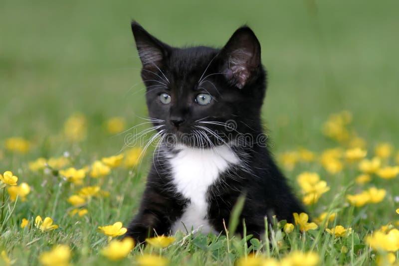 Kätzchen, das in den Butterblumeen sitzt lizenzfreie stockfotografie