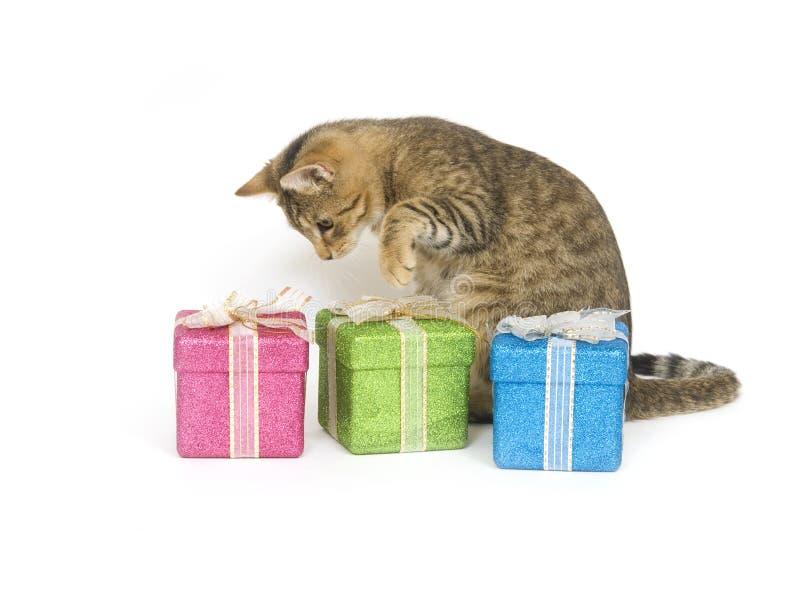 Kätzchen, das ein Geschenk auswählt stockbilder