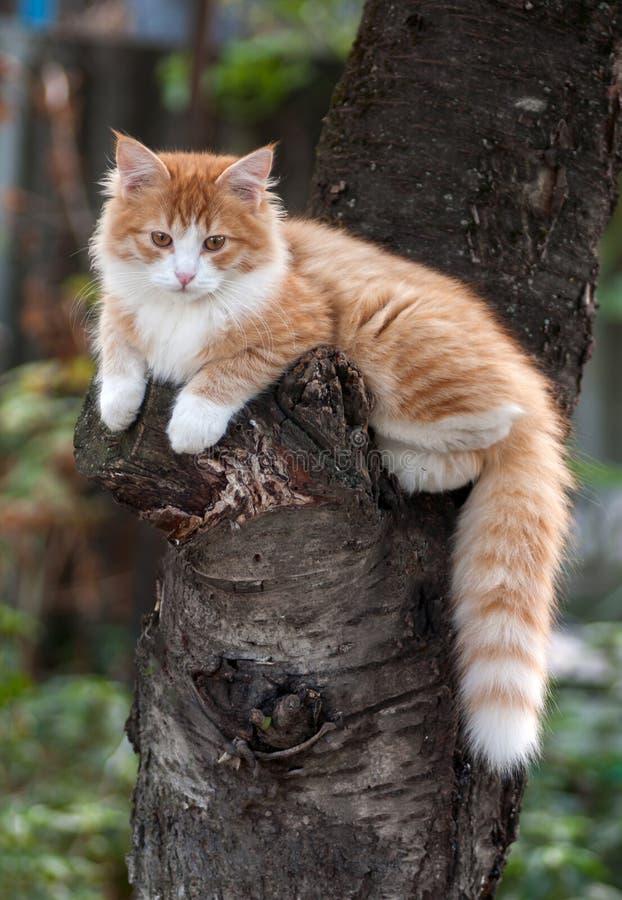 Kätzchen, das in einem Baum sitzt stockfotografie
