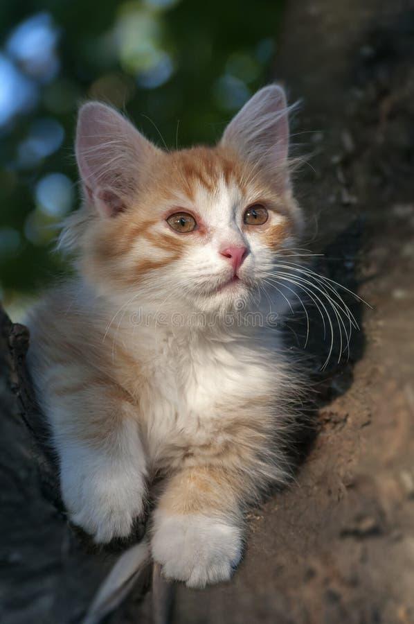 Kätzchen, das in einem Baum sitzt lizenzfreies stockbild