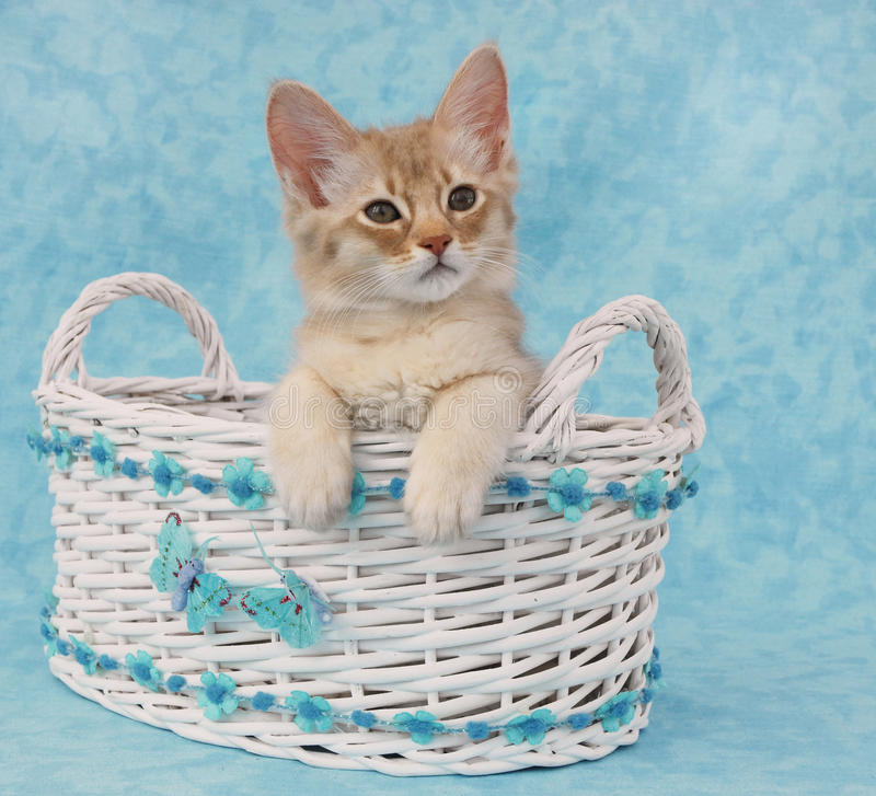 Kätzchen, das in einem Korb sitzt lizenzfreie stockbilder