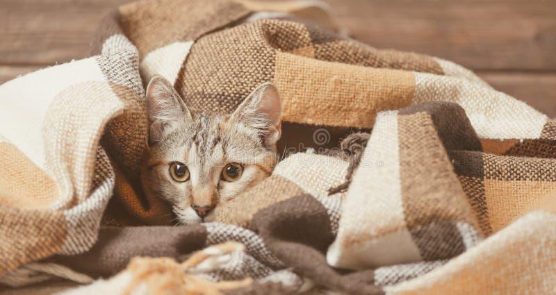 Kätzchen, das entlang der Kamera anstarrt lizenzfreies stockfoto