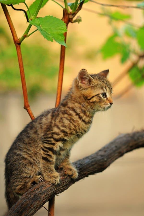 Kätzchen, das im Baum sitzt lizenzfreies stockfoto