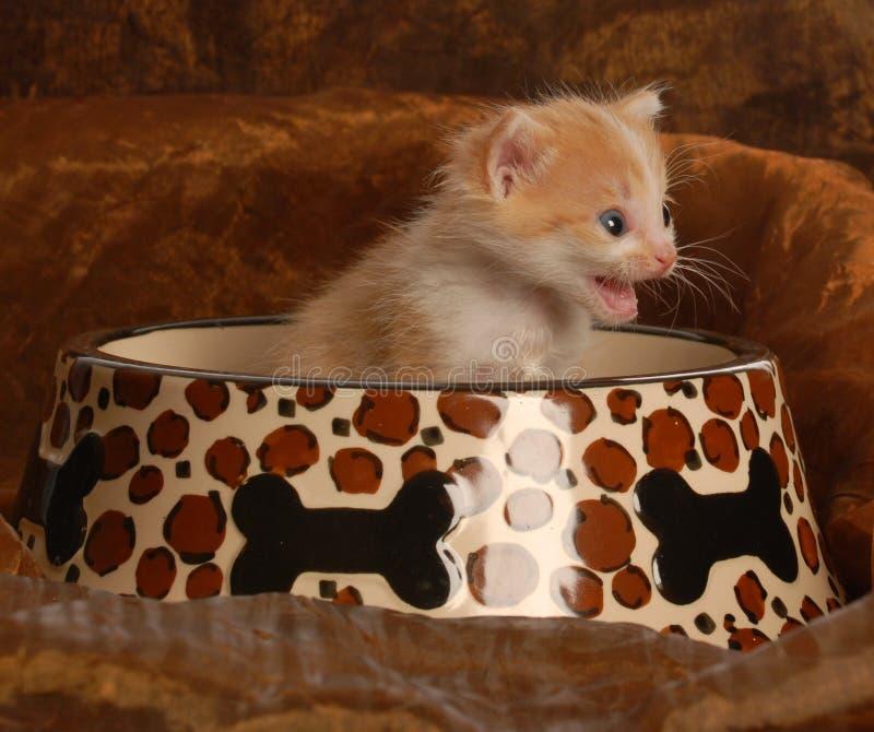 Kätzchen, das im Nahrungsmittelteller sitzt stockbilder