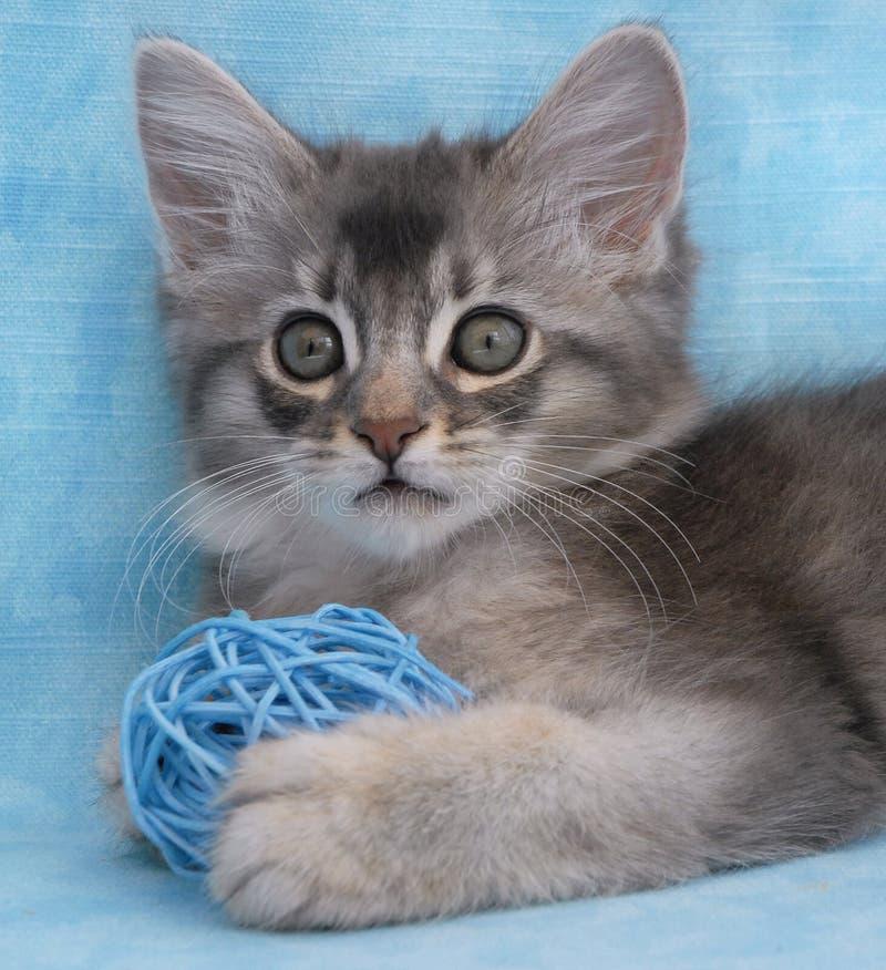 Kätzchen, das mit einer Kugel spielt stockbilder