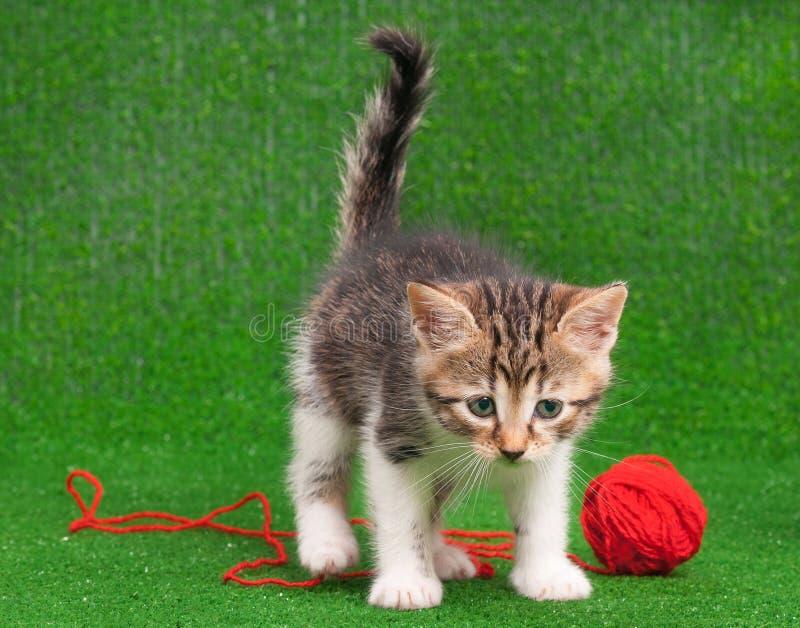 Kätzchen, das roten Schlaufenthread spielt lizenzfreies stockfoto