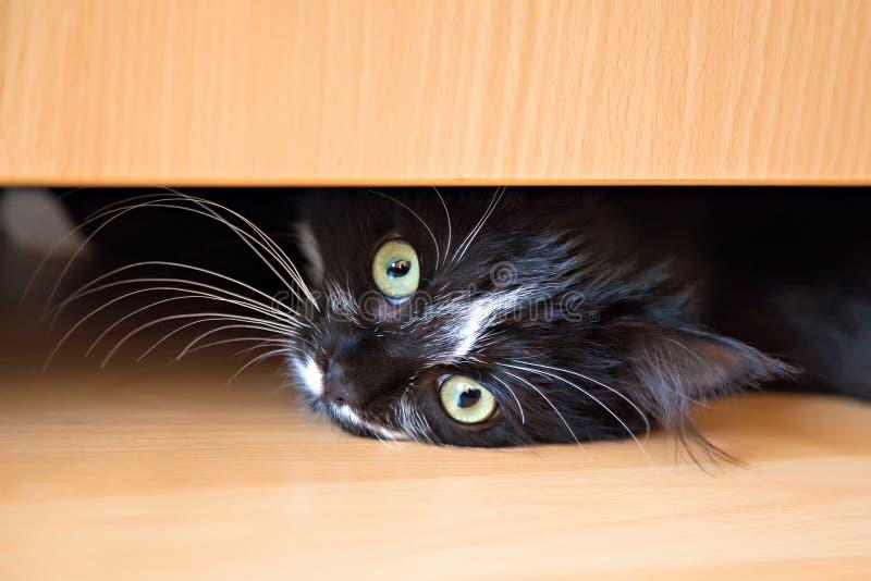 Kätzchen, das unter Fach der Garderobe liegt stockfotos