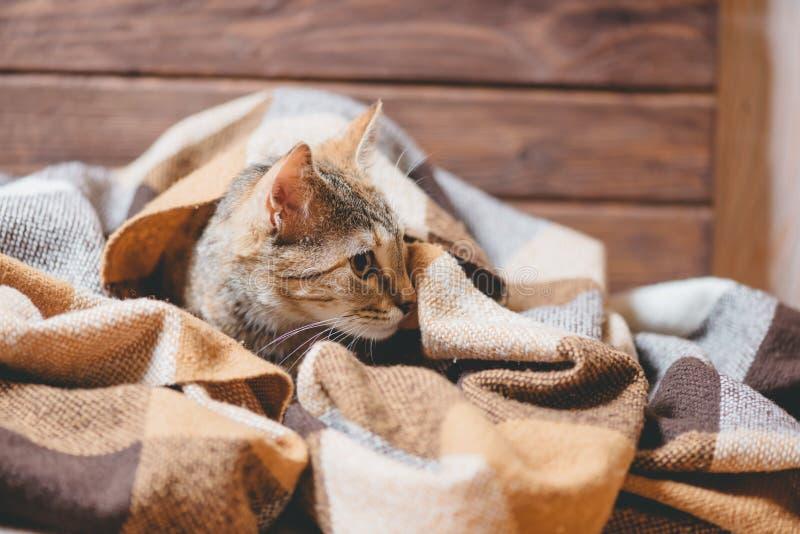 Kätzchen, das unter Plaid liegt und weg anstarrt stockfotos
