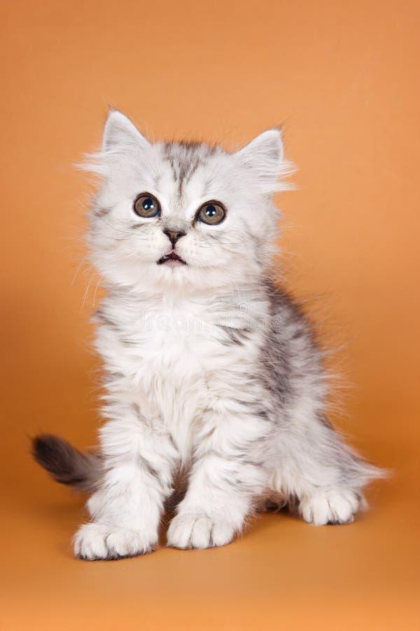 Kätzchen der getigerten Katze auf einer Orange lizenzfreie stockfotos