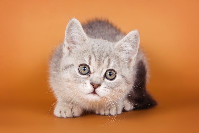 Kätzchen der getigerten Katze auf einer Orange stockbilder