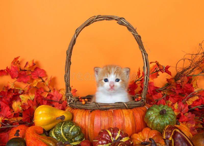 Kätzchen der getigerten Katze in einem Herbstkorb stockfotos