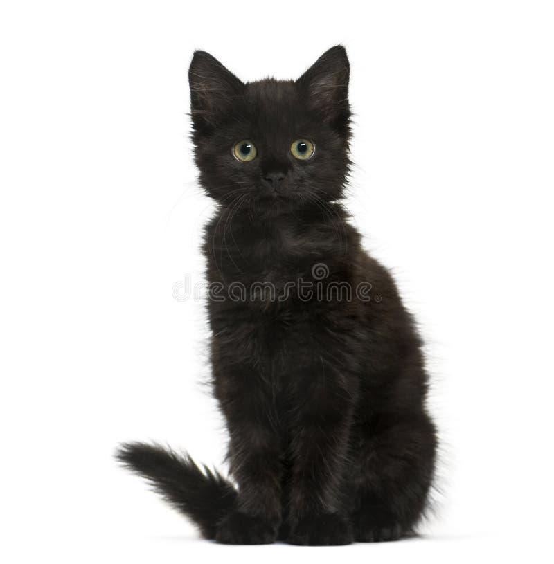 Kätzchen der schwarzen Katze, welches die Kamera, an lokalisiert sitzt und betrachtet lizenzfreie stockbilder