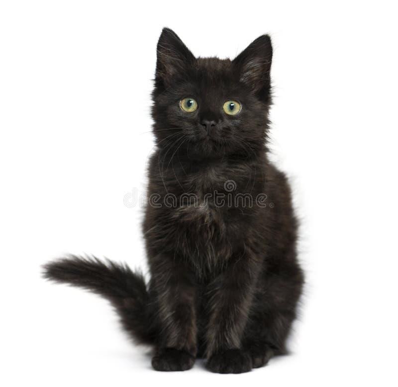 Kätzchen der schwarzen Katze, welches die Kamera, an lokalisiert sitzt und betrachtet stockfotos