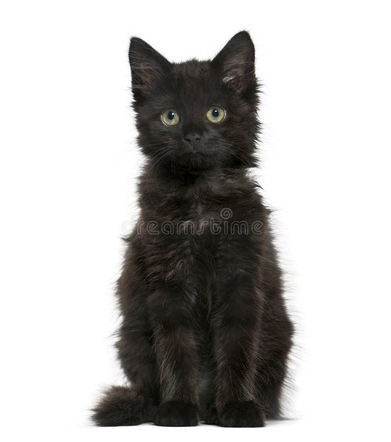 Kätzchen der schwarzen Katze, welches die Kamera, an lokalisiert sitzt und betrachtet stockbild