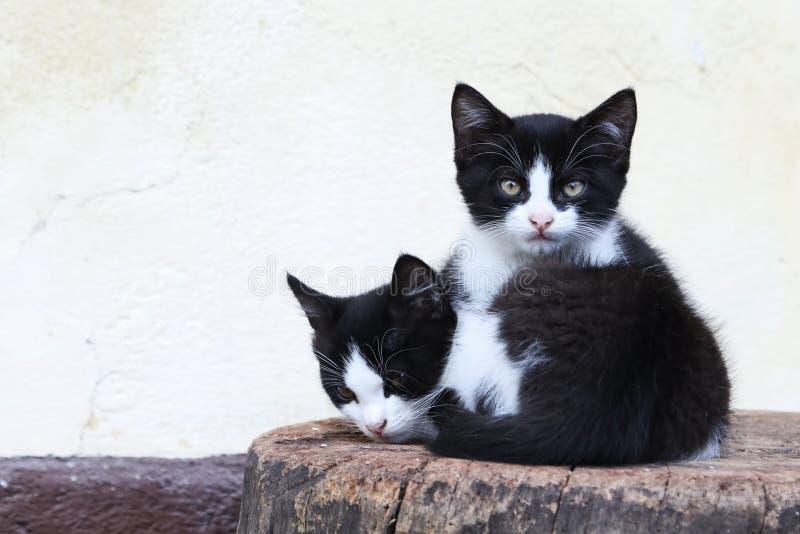 Kätzchen, die auf einem Holzklotz an einem Bauernhof in Bohinj, Slowenien liegen lizenzfreie stockbilder