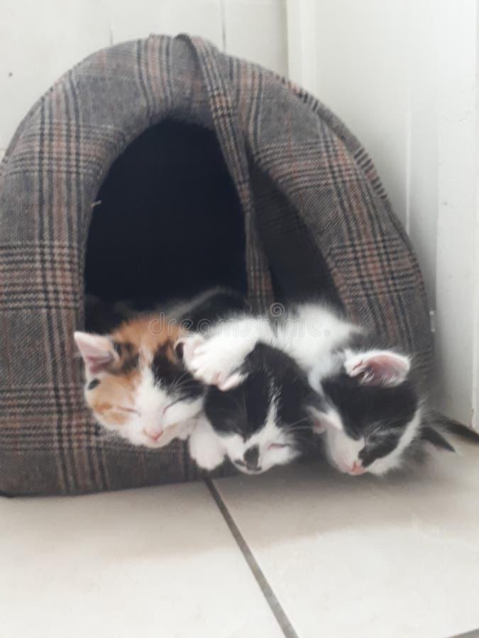 Kätzchen in einem Bettschlafen lizenzfreie stockfotos