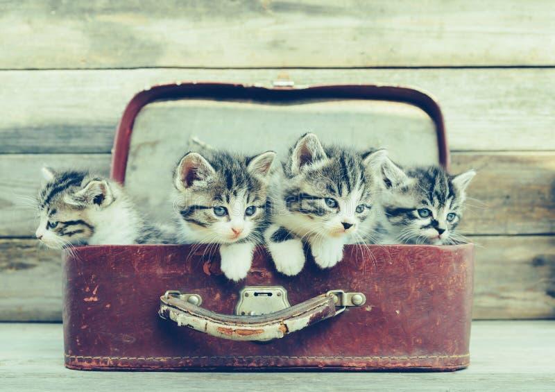 Kätzchen in einem Koffer stockbilder