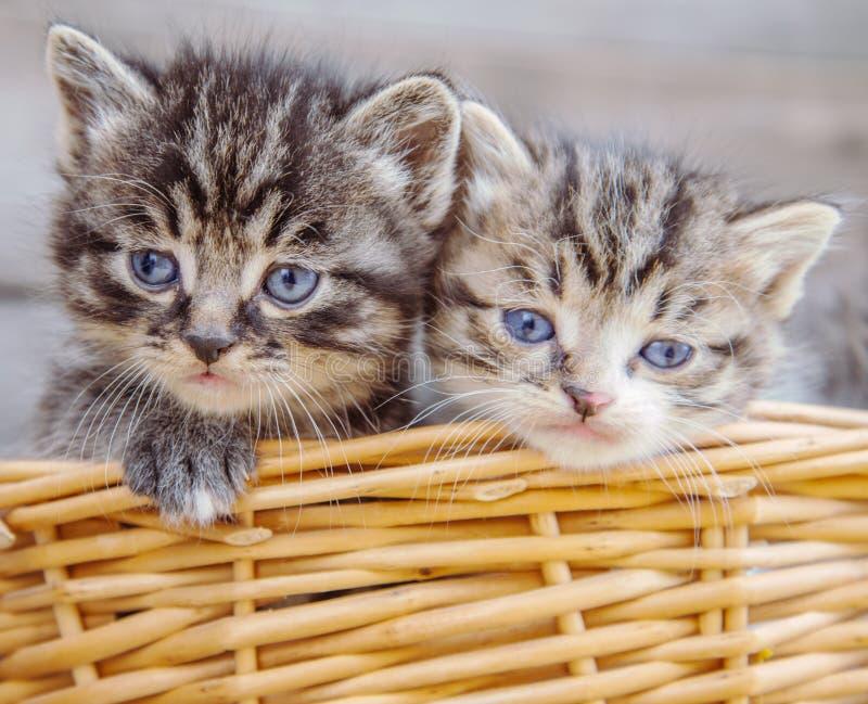 Kätzchen in einem Korb lizenzfreie stockfotografie