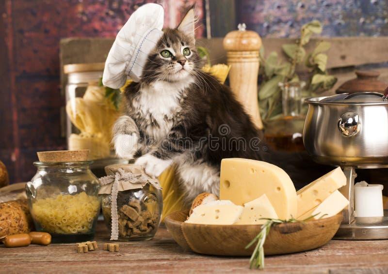 Kätzchen in einer Koch ` s Kappe stockbild