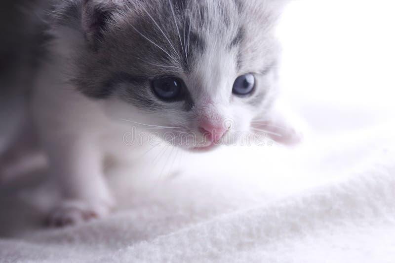 Kätzchen-Gehen stockbild