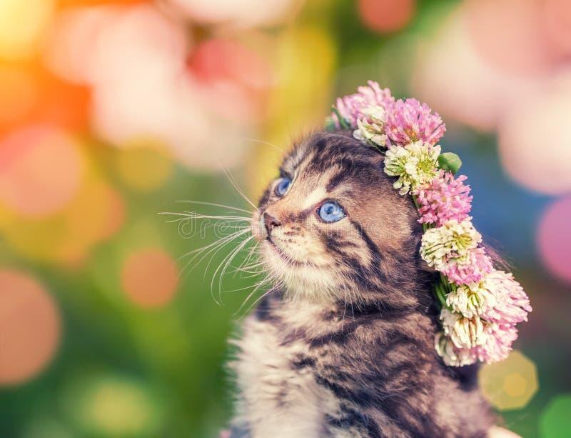 Kätzchen gekrönt mit einem Chaplet lizenzfreie stockfotos